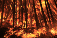 Feuer - Aus meiner Serie Elemente