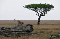 Serengeti 1