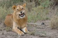 Serengeti 2